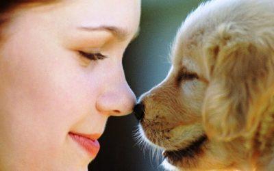 I cani studiano il nostro sguardo comprendendo i nostri pensieri