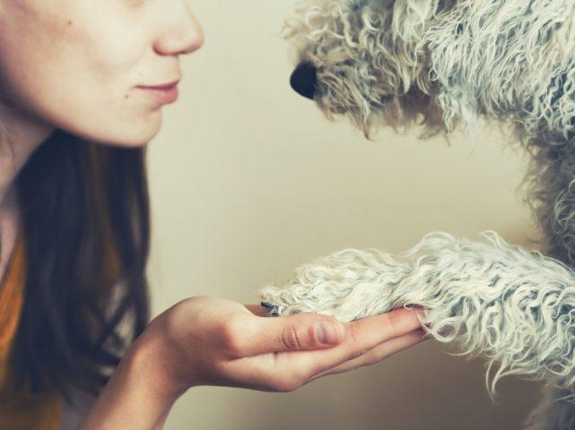 Empatia…il comportamento dei nostri cani dipende da noi