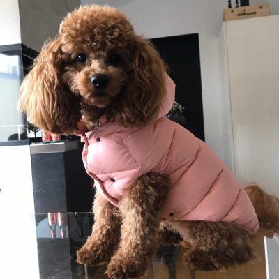 Rosa Forever soft jacket